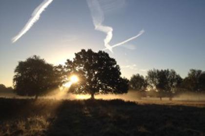 Sunrise Bushy Park