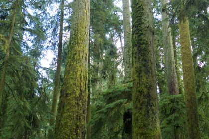 Cathedral Grove, BC